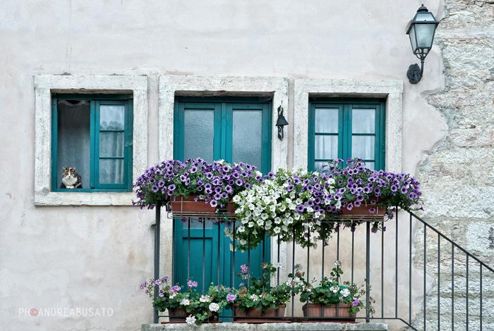 facciata con gatto e fiori